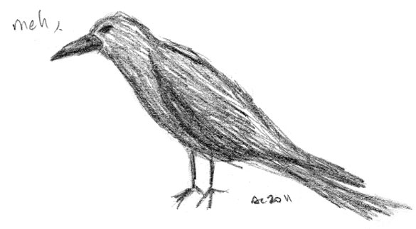 Crow sketch by Amy Crook