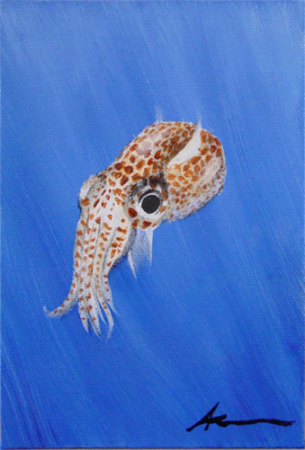 Bobtail Squid by Amy Crook