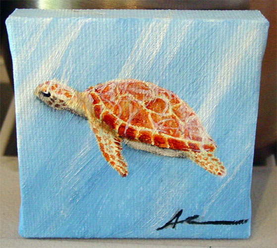 Sea Turtle by Amy Crook