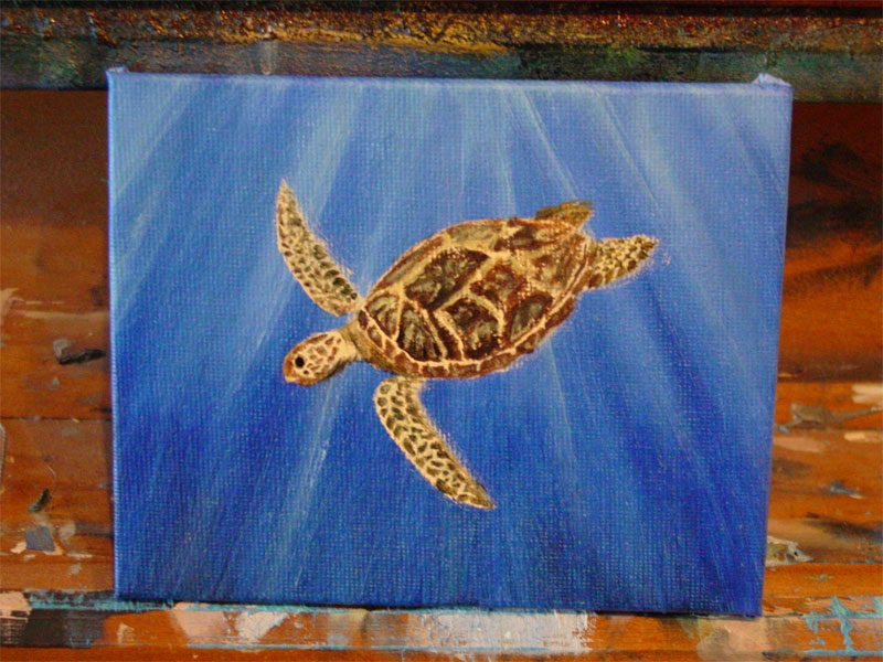 Green Sea Turtle, step 4, by Amy Crook