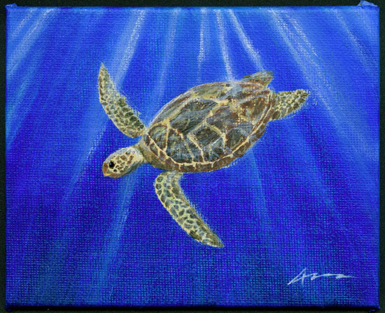 Green Sea Turtle by Amy Crook