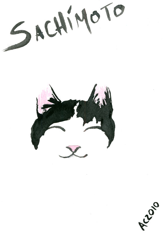 Sachimoto by Amy Crook