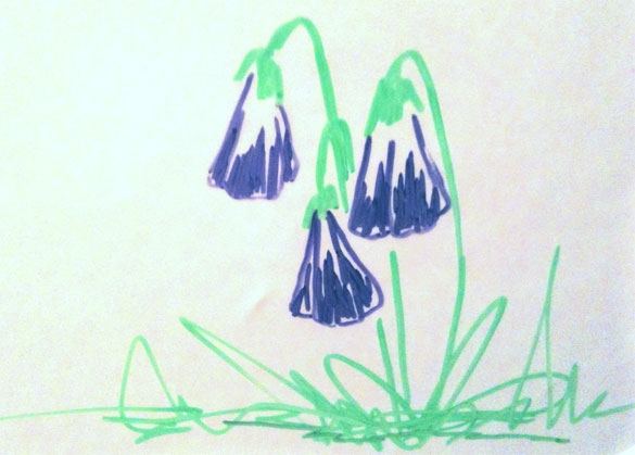 Whiteboard Violets by Amy Crook