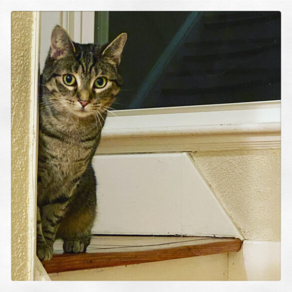 photo of a tabby cat peeking around a corner